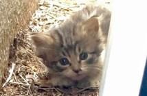 独りぼっちの子猫