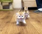 可愛さ全開で駆け寄って来る3匹の子猫。遠ざかっていく後ろ姿も、とってもキュートだった ( *´艸`)♡