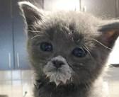優しい夫婦に助け出された子猫。新しい家で食べ方を教わり、徐々に成長していく姿に心が温まる (*´ω`*)