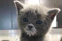 口の周りにミルクをつける子猫