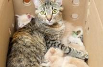 子猫を育てる母猫