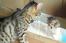 子猫を応援する母猫