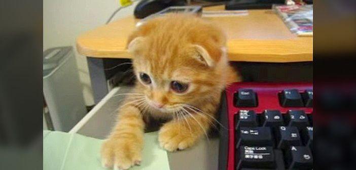 机の下からヒョッコリと現れた子猫ちゃん。仕事の指示をしっかりしてから、再び机の下に ( *´艸`)