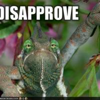 Disapproving Chameleon