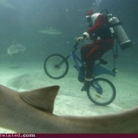 Santa Claus riding a bike while scuba-diving with sharks