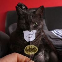 Amazing device that transforms cat to batman!