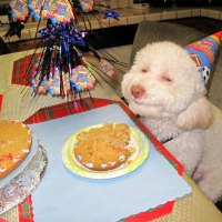Stoned party dog