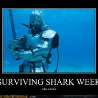 How to survive shark week