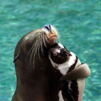Seal hugging a penguin
