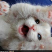 Surprise cute kitten
