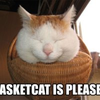 Basket cat is pleased!