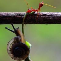 Ant saves snail