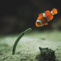 Have you seen my son Nemo?