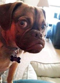 grumpy-puppy