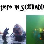 scubadiving-constanta