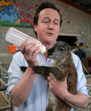 David Cameron rearing sheep