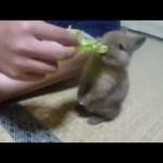 【16選】かわいい子ウサギの癒し動画まとめ