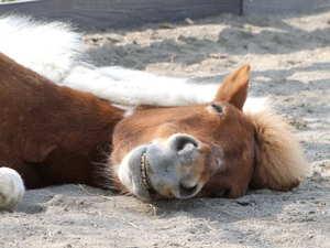 可愛い,動物,寝顔,画像,まとめ025