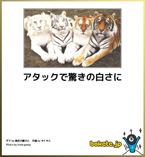 bokete, おもしろ, まとめ, ボケて, 爆笑, 画像2581
