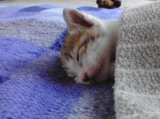 可愛い,おやすみ,猫,画像,まとめ022