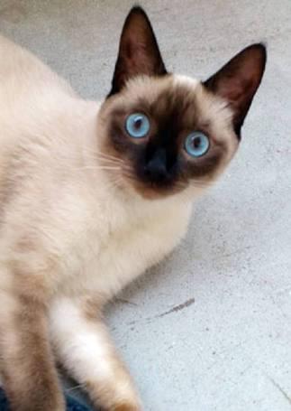 うっとり,猫,まん丸,目,美しすぎる,画像017