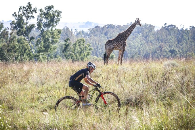Bryce Munro rides past a giraffe  in the Cradle Moon section of Stage 2 of the Glacier Cradle Traverse. Photo by Oakpics.com.