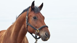 Horses for Sale - Classifieds