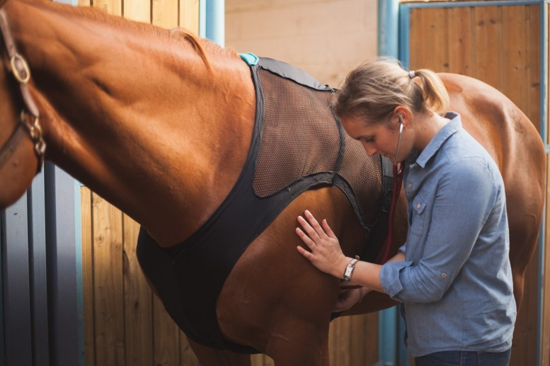 Let Equisense Care Help You and Your Horse