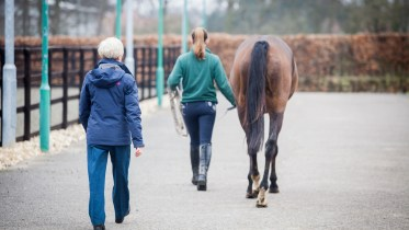 Lameness Assessment with Everything Horse and the Animal Health Trust