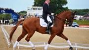 Richard Davison competing at Bolesworth International