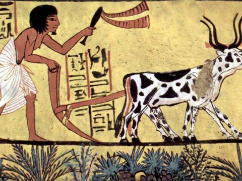 Egyptian farmer plowing