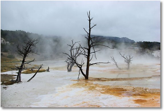 canary springs at mammoth hot springs yellowstone