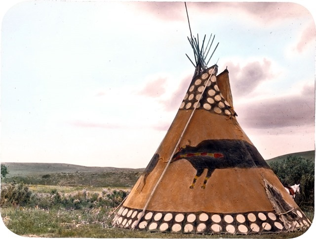 Black Buffalo Tipi