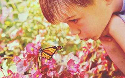 Butterflies in the Canadian Classroom
