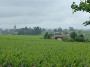 View of the Saint Emilion vineyards