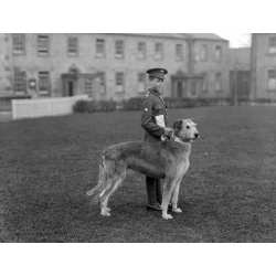 Small Crop Of Irish Dog Breeds