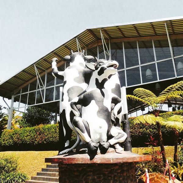 Patung Sapi Cimory Bawen
