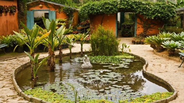 Horto Brejal, em Petrópolis, tem exposição de orquídeas e bromélias