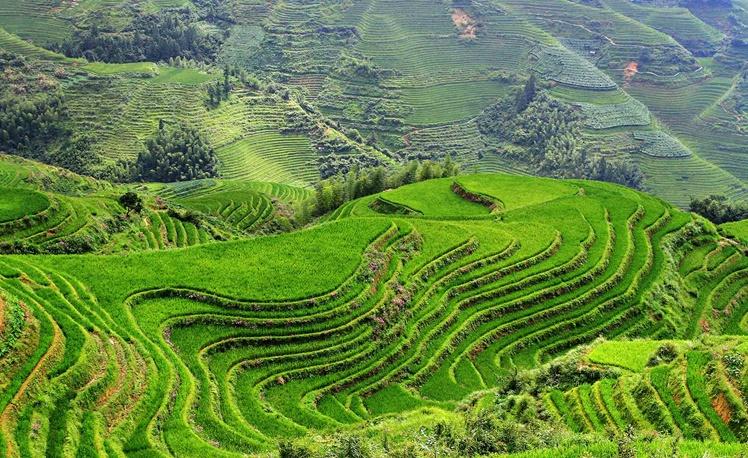2. Rice Terraces, Vietnam 1