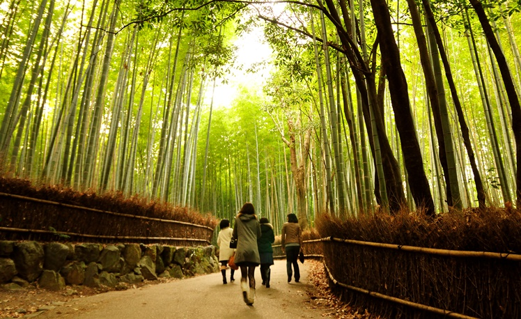 7. Bamboo Forest, Japan