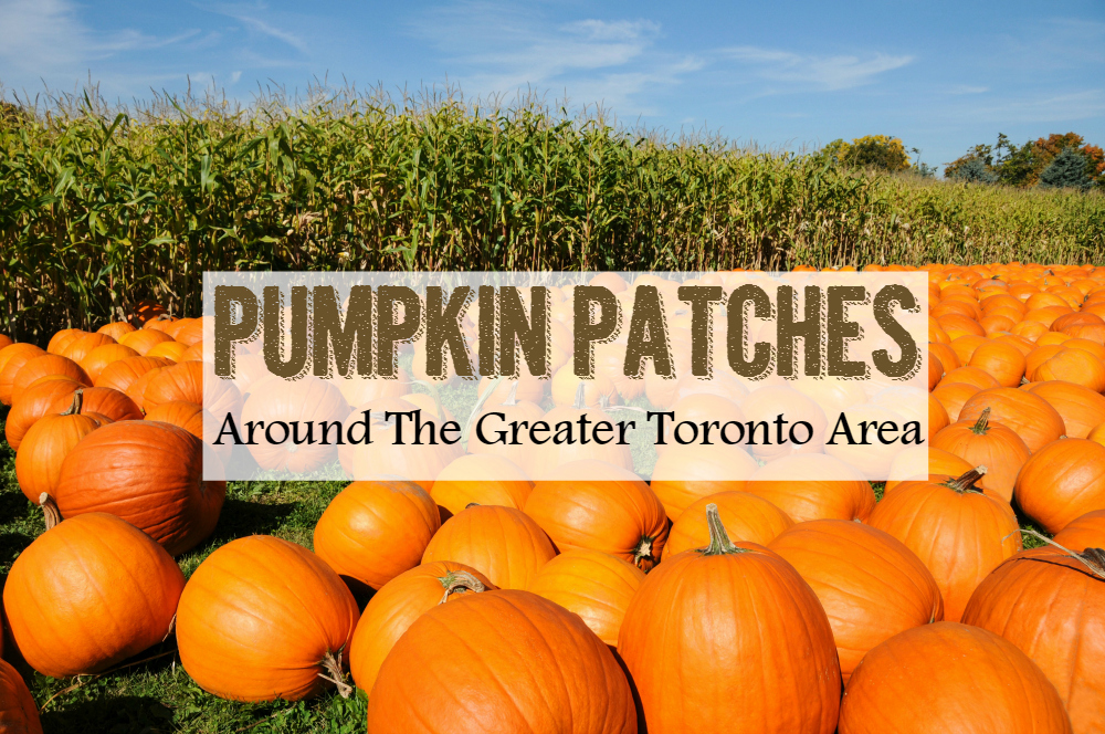pumpkin patches toronto