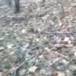 Deer Hunter Scared Stiff by Pretending Deer -Video