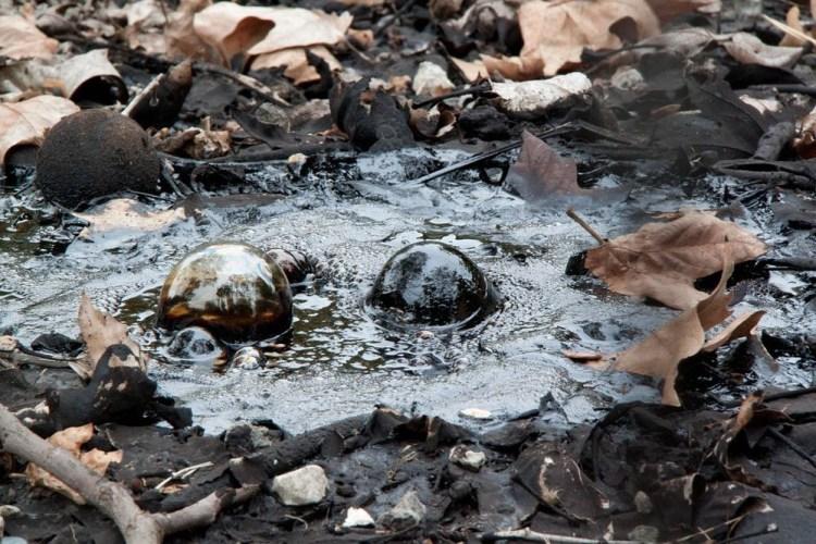 tar-pits-fossils-46