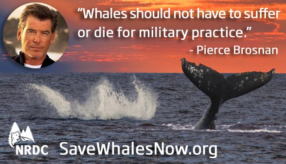 Help stop the Navy's Attack on Whales NOW