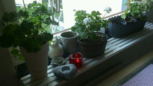 snygg fönsterbräda