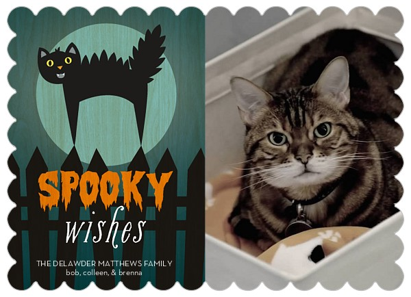 Spooky Wishes Front | Faith, Hope, Love, and Luck Survive Despite a Whiskered Accomplice