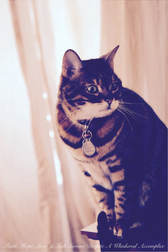Happy Caturday! - 04/18/2015 | Faith, Hope, Love, and Luck Survive Despite a Whiskered Accomplice