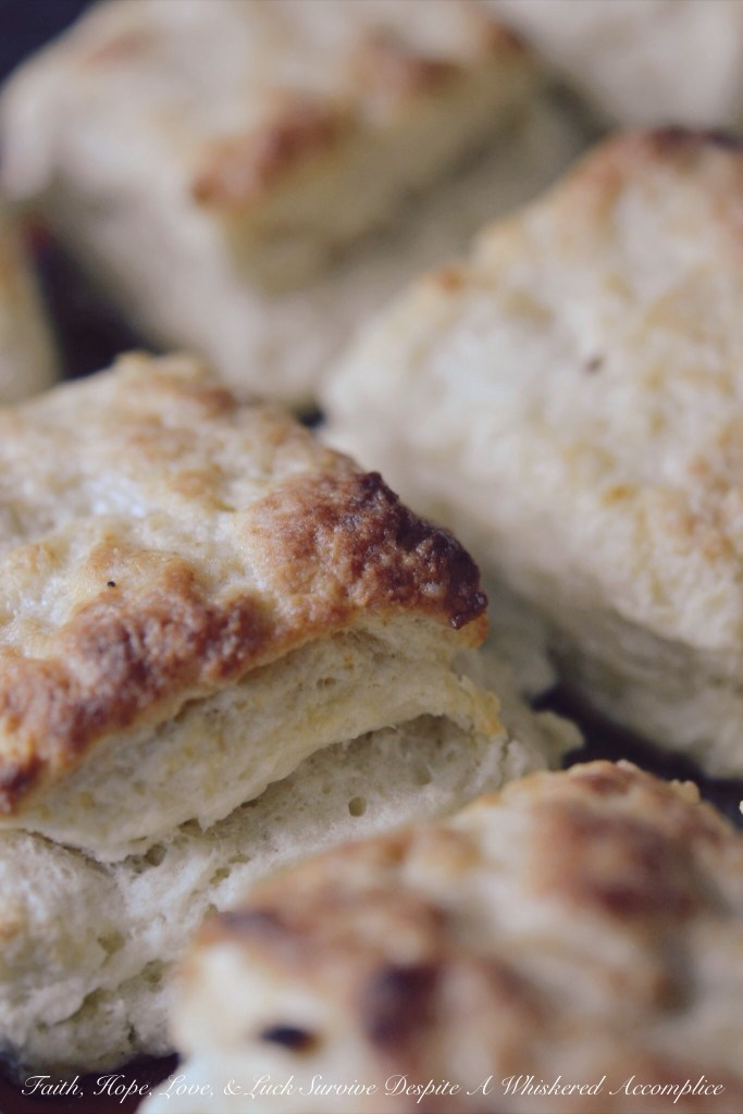 Biscuits for a Crowd, Group, or Herd | Faith, Hope, Love, and Luck Survive Despite a Whiskered Accomplice