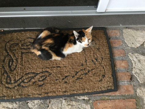 The calico cat -- posing for Kat.