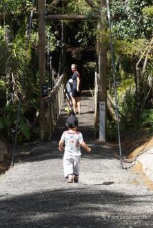 Waitakere Ranges Regional Park- auf dem Auckland City Walk